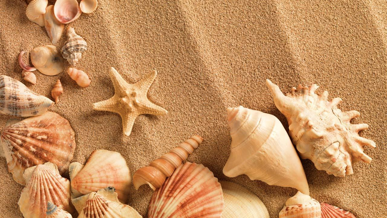 Sea shells laying in the sand on a beach.